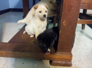 Izzy is the black one.  This is when we got her at the shelter =)