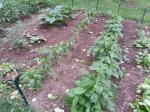 Gardening in Real Life