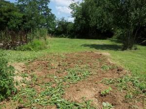 look at all of that that I dug up!  It's so we can plant more pumpkins!