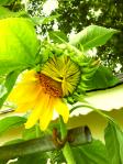 Life in Half Bloom