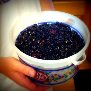 that's what a whole gallon of wild blackberries looks like.