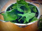 spinach from our garden for the wraps!