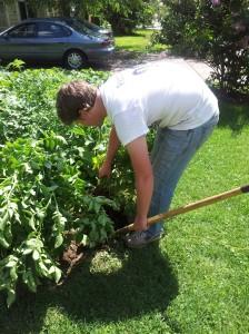 Garden Update - 2