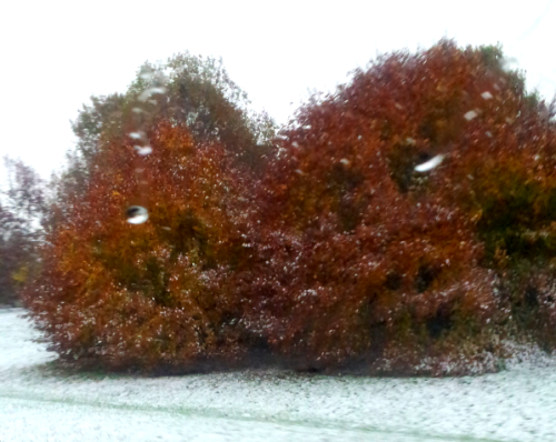 Fall in the snow.  One of the most beautiful things!