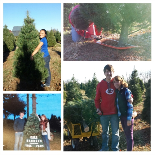 Picking the tree out this year.  the picture in the bottom left is the one they took at Barker's Tree Farm last year.   They had it ready for us to pick up this year when we went to get our new tree.