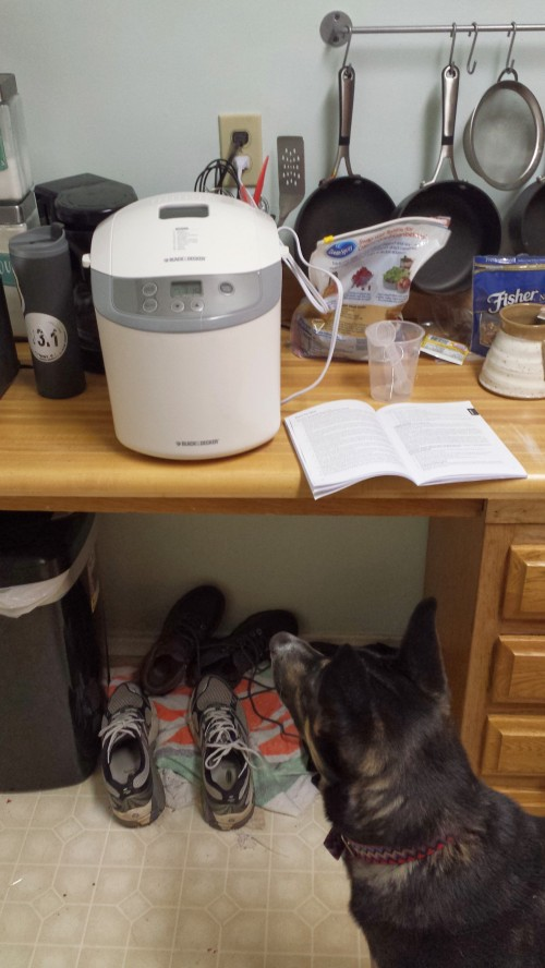 Izzy was very intrigued by the bread machines kneading noises... and probably the delicious smell too!